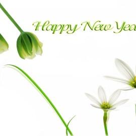 Happy New Year – Flowers Wallpaper
