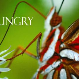 Hungry Wallpaper