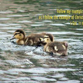 I Corinthians 11:1 Wallpaper
