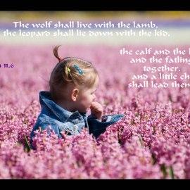 Isaiah 11:6 Wallpaper