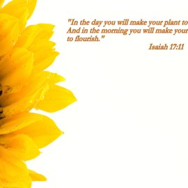 Isaiah 17:11 Wallpaper