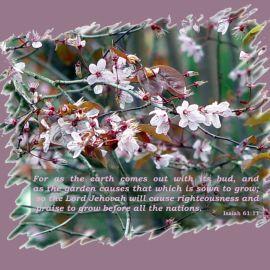 Isaiah 61:11 Wallpaper