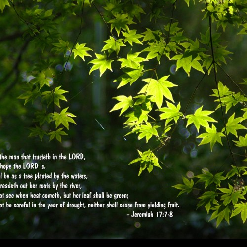 Jeremiah 17:7-8 christian wallpaper free download. Use on PC, Mac, Android, iPhone or any device you like.