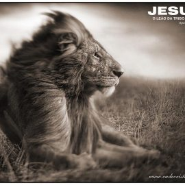 Jesus, Lion Wallpaper