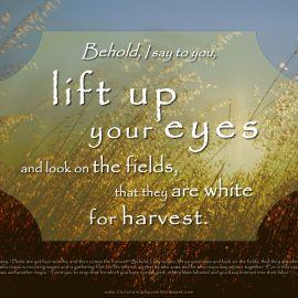 John 4:35-38 Wallpaper