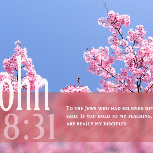 John 8:31 christian wallpaper free download. Use on PC, Mac, Android, iPhone or any device you like.