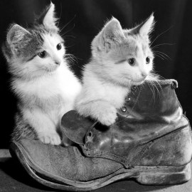 Kittens on Boots Wallpaper