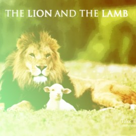 Lion and sheep Wallpaper