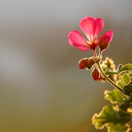 Little Flower Wallpaper