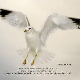 Matthew 6:26 Wallpaper