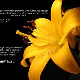 Matthew 6:28 & Luke 12:27 Wallpaper