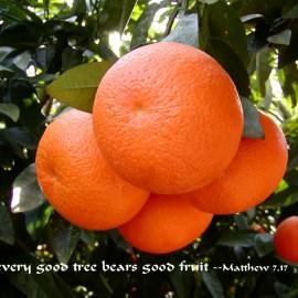 Matthew 7:17 Wallpaper