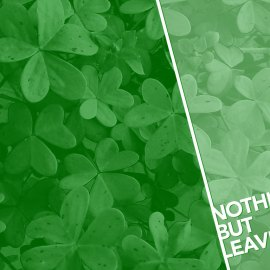 Nothing but Leaves Wallpaper