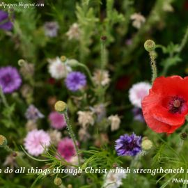 Philippians 4:12 Wallpaper