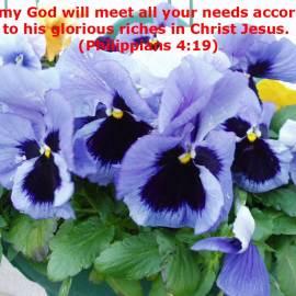 Philippians 4:19 Wallpaper