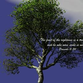 Proverbs 11:30 Wallpaper