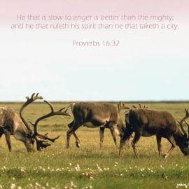 Proverbs 16:32 Wallpaper
