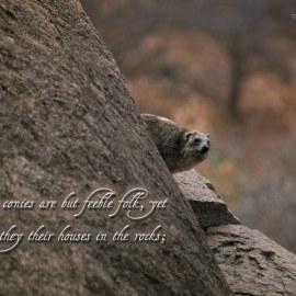 Proverbs 30:26 Wallpaper
