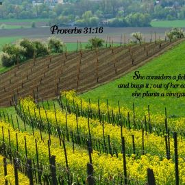 Proverbs 31:16 Wallpaper