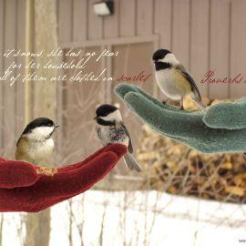 Proverbs 31:21 Wallpaper