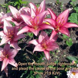 Proverbs 31:9 Wallpaper