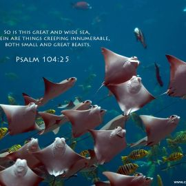 Psalm 104:25 Wallpaper