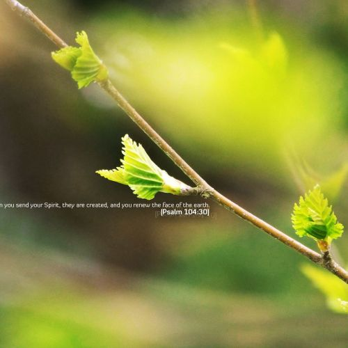 Psalm 104:30 christian wallpaper free download. Use on PC, Mac, Android, iPhone or any device you like.
