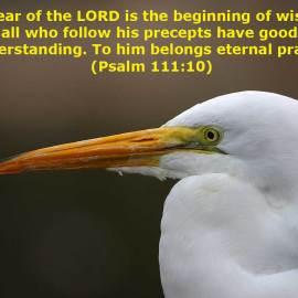 Psalm 111:10 Wallpaper