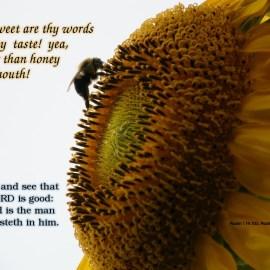 Psalm 119:103 & 34:8 Wallpaper