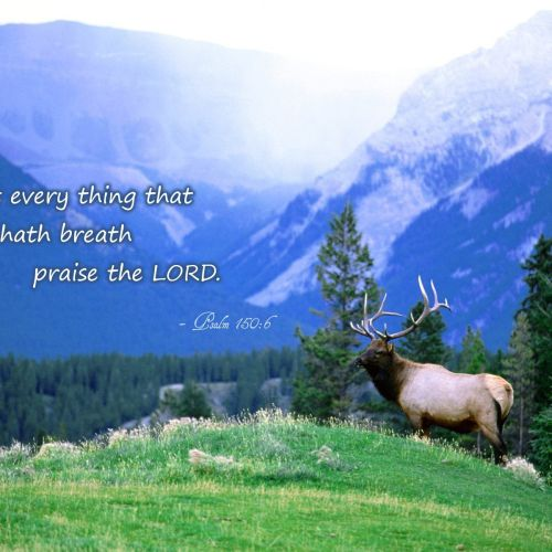 Psalm 150:6 christian wallpaper free download. Use on PC, Mac, Android, iPhone or any device you like.