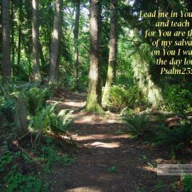 Psalm 25:5 Wallpaper