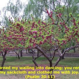 Psalm 30:11 Wallpaper