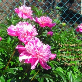 Psalm 33:6 and Flowers Wallpaper