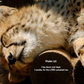 Psalm 3:5 Wallpaper