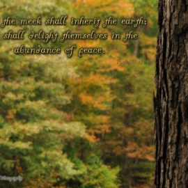 Psalm 37:11 Wallpaper