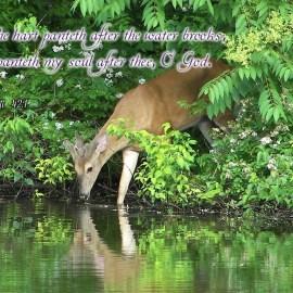 Psalm 4:21 Wallpaper