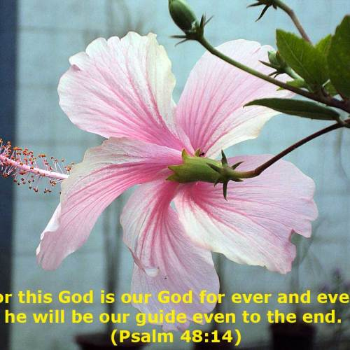 Psalm 48:14 christian wallpaper free download. Use on PC, Mac, Android, iPhone or any device you like.