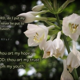 Psalm 71:1 e 5 Wallpaper