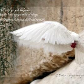 Psalm 91:4 Wallpaper