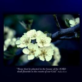 Psalm 92:13 Wallpaper