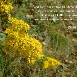 Psalms 34:8-9 Wallpaper