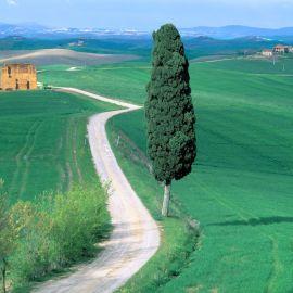 Road in farm Wallpaper