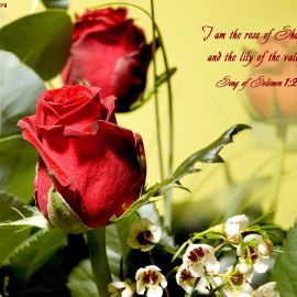 Song of Solomon 1:2 Wallpaper