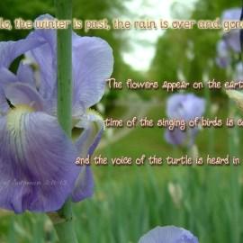 Song of Solomon 2:11-12 Wallpaper