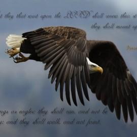 Wings as Eagles Wallpaper