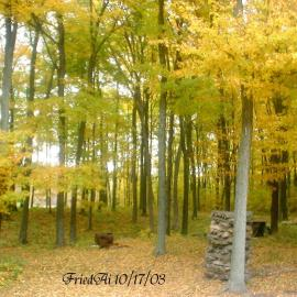 Yellow Trees Wallpaper