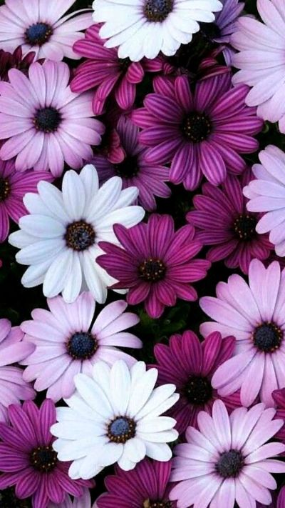 Flower iPhone Wallpapers - Top Free Flower iPhone Backgrounds - WallpaperAccess