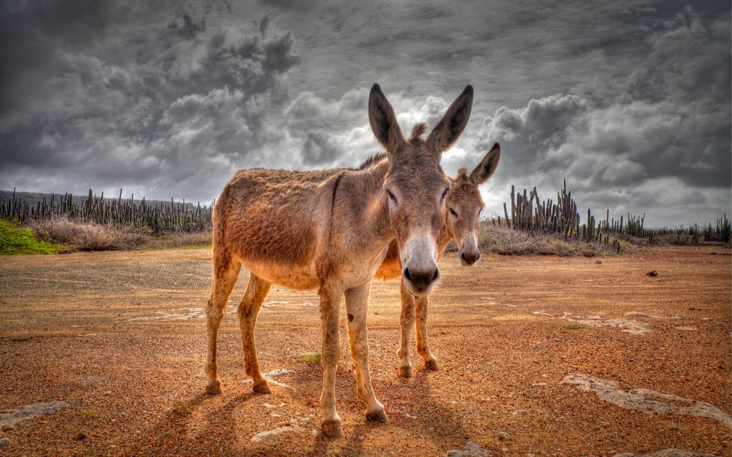 Donkey Wallpaper Donkey Wallpapers Top Free Donkey Backgrounds Wallpaperaccess