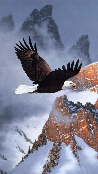 American Eagle Wallpapers - Top Free American Eagle Backgrounds - WallpaperAccess