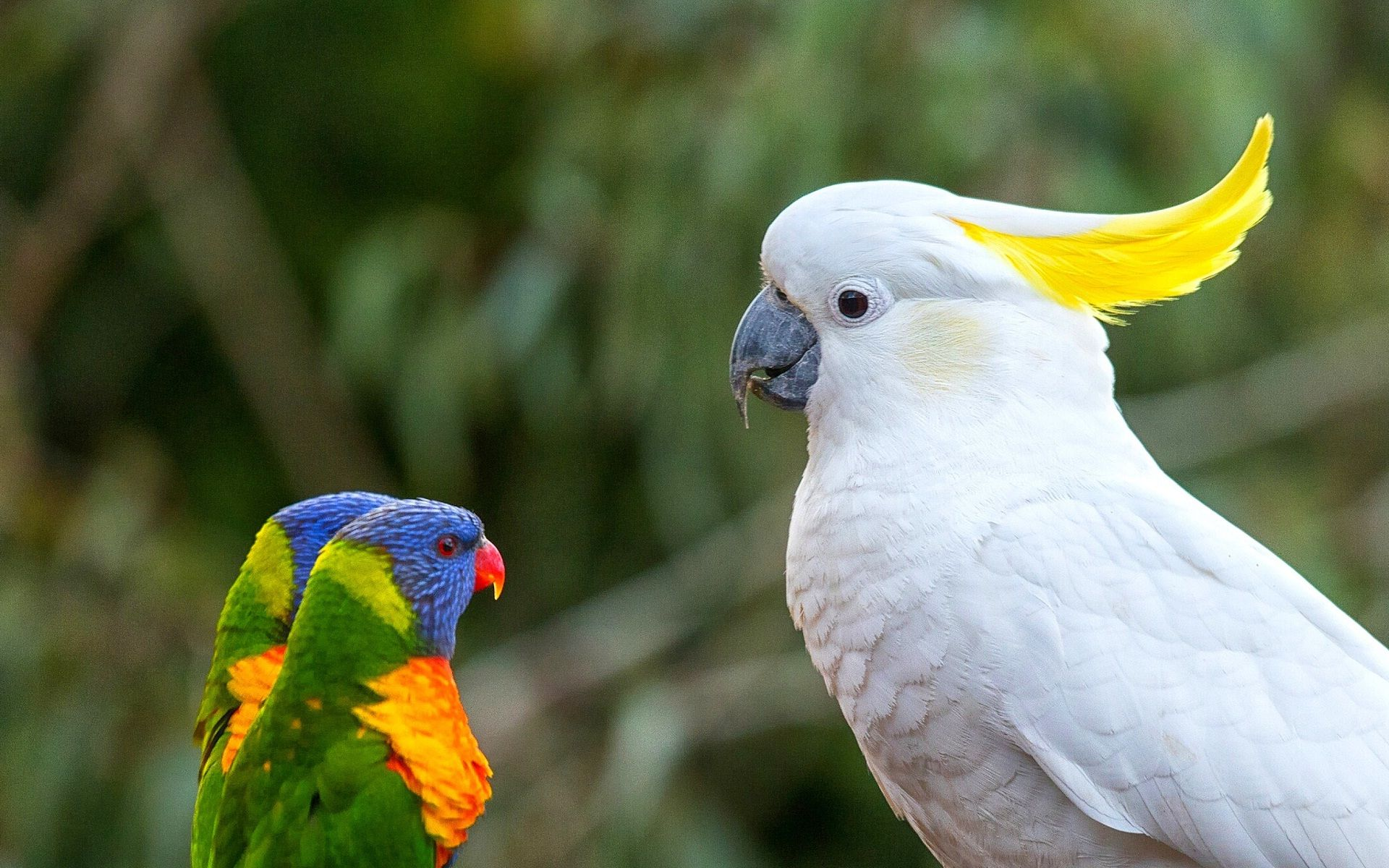 Parot Wallpapers 92 Best 70 Parrot Pictures Hd Wallpapers Download Background